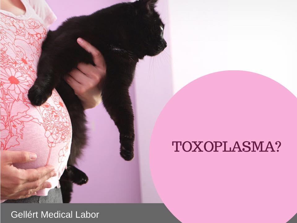 Miluklub - Terhesség és a toxoplazmózis: okai, tünetei és megelőzése